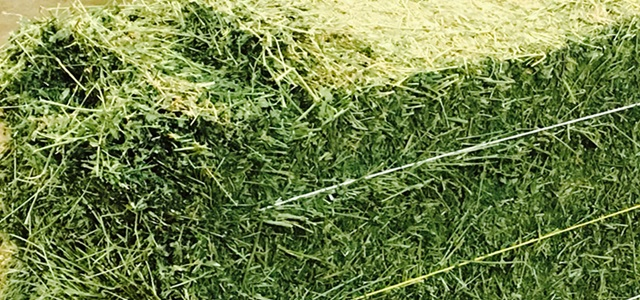 Alfalfa Hay Market anticipated to witness healthy CAGR over 2016-2024