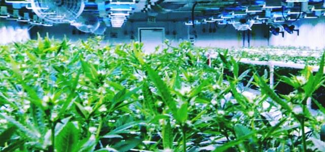 Aurora Cannabis signs deal worth USD 3.2 billion to buy MedReleaf