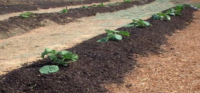 Biosolids Market: Global Industry Analysis and Opportunity Assessment 2017-2024 GMI Estimate