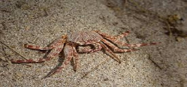 Crustacean Market with Segmentation, Statistical Forecast and Competitive Analysis Report to 2024