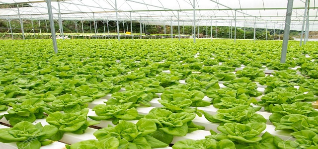 Hydroponic Vegetable Market: Share, Size, Competitive Strategies and Forecast 2017 – 2024