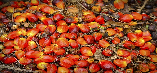 Palm Oil Derivatives Market with Statistical Forecast and Competitive Analysis Report to 2024