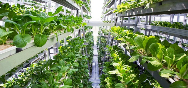 Vertical Farming Market to witness a high growth by 2024